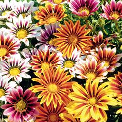 Растенията са в саксийки №9